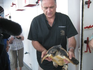 Richard Farman, Director of Aquaium des Lagons, holds a satellite-tagged loggerhead turtle prior to release.