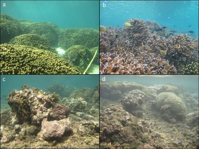 Figure 1. Visual, spatial comparison of coral growth, development, and appearance of shallow habitats of the (a) south, (b) central and (c, d) northern areas of the backreef in Faga`alu Bay, American Samoa. NOAA photos by Bernardo Vargas-Ángel