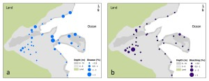 Figure 5. Spatial comparison of prevalence (%) of (a) bleaching and (b) disease from belt-transect surveys conducted in March–August 2012 in Faga`alu Bay.