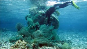 Russell Reardon on March 31 removes a large derelict fishing net from the reef at Midway Atoll. NOAA photo by James Morioka