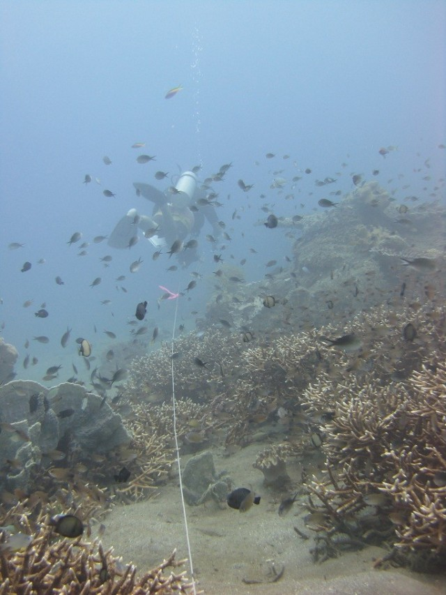 Kevin Lino of the PIFSC Coral Reef Ecosystem Division on June 16 reels out a transect line before he conducts a stationary-point-count survey of reef fishes off the northern coast of Timor-Leste. NOAA photo