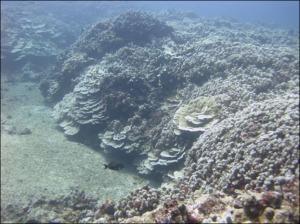 LAN_corals_BVA
