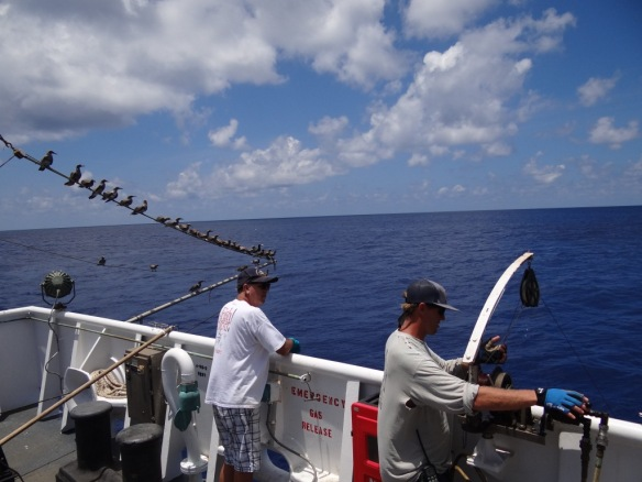 The Chief Scientist, Bob Humphreys, along with a host of seabirds watch Robert Spina closely as he samples for bottomfish