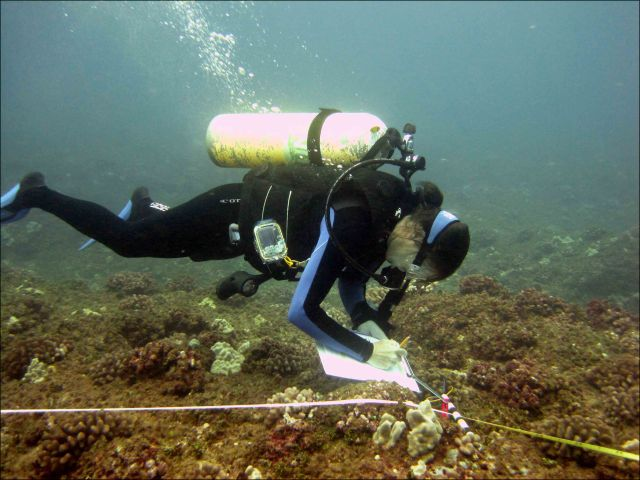 Dione Swanson, a member of the benthic team at the PIFSC Coral Reef Ecosystem Division, conducts surveys for corals at a Rapid Ecological Assessment site implementing the belt-transect method. NOAA photo