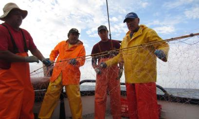By collaborating with Mexican fishermen, Dr. Wang and his team have been able to test strategies that may be useful in reducing unwanted sea turtle interactions with gillnets.
