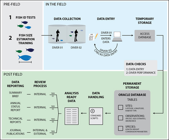 Figure 1. This diagram illustrates the training, data collection, data processing, and reporting phases the fish and benthic surveys conducted by the fish team for the Pacific Reef Assessment and Monitoring Program.