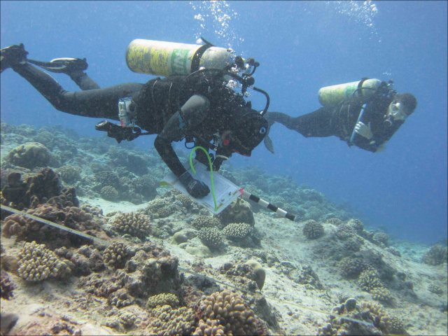 On a reef off the coast of Rota Island, divers conduct belt-transect surveys of the benthos on April 8. NOAA photo by Bernardo Vargas-Ángel