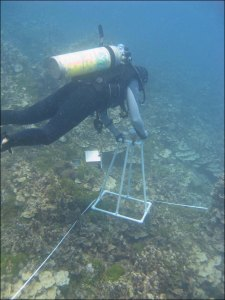 A diver on April 13 collects digital images of reef benthos along a transect at a Climate Monitoring Station off the cost of Saipan. NOAA photo