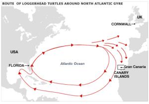 General turtle migratory path