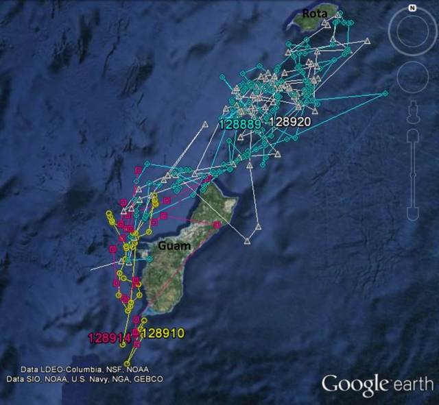 Figure 4: Satellite tracks of short-finned pilot whales tagged off of Guam on 19 May (ID# 128889 and 128920) and 25 May (ID# 128910 and 128914).