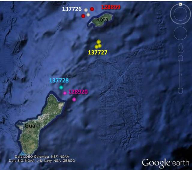 Figure 3: Satellite tag locations for short-finned pilot whales between 16:00 and 17:00 on 18 June.
