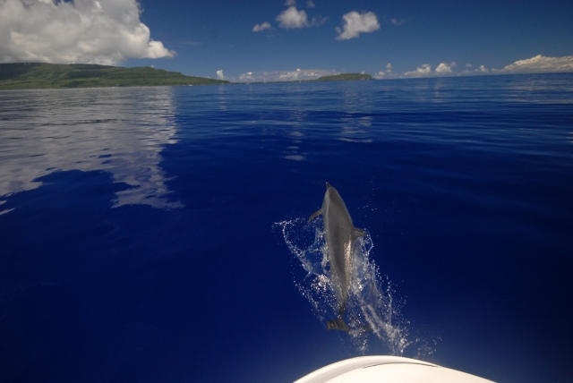 Figure 7: Spotted dolphin leaping in front of our boat as we returned to the harbor off of Rota (photo credit: Adam Ü).