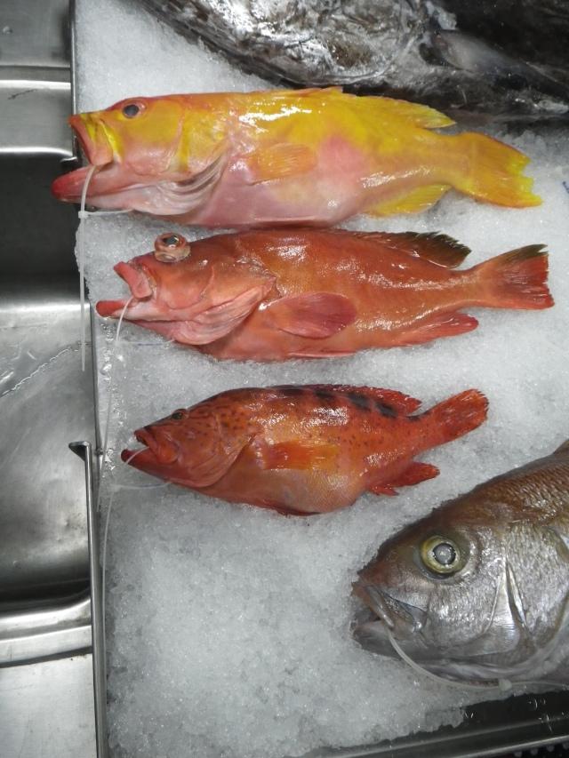 CNMI groupers (top to bottom) Seloptia powelli, Epinephelus retouti , Cephalopholis sexmaculata.