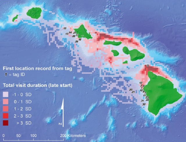 The collection of telemetry data from two of the three social clusters of MHI insular false killer whales tagged off leeward Hawai'i and O'ahu indicate an area of particularly high use off the north side of Moloka'i and Maui. Figure copied from Baird et al. (2012).