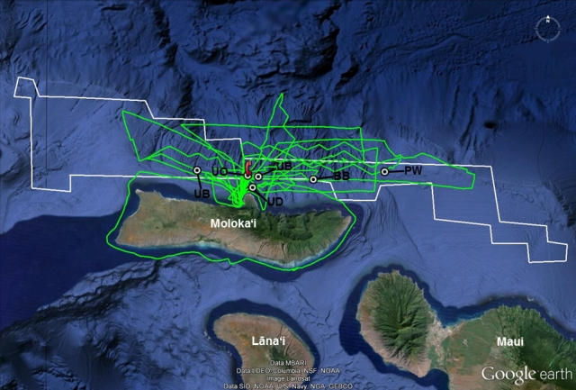 "Map of survey effort in Moloka'i waters.  The green lines are the survey tracks.  The white line outlines the highest use area of the false killer whale ""hot spot.""  Circles indicate sighting locations: BB = Blainville's beaked whale, PW = pilot whale, UB = unidentified beaked whale, UD = unidentified large dolphin (""blackfish""), and UO = unidentified odontocete.  The telephone symbol shows the position of the HARP."