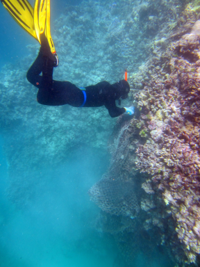 A marine debris diver carefully cuts away a fishing net from the substrate at Maro Reef.