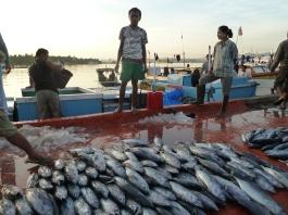 Kendari Fish Market, Southeast Sulawesi, Indonesia.