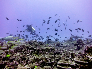 Figure 6: Fish REA diver collecting data on fish species ID, sizes, and abundance at Johnston Atoll. Photo credit Louise Giuseffi.