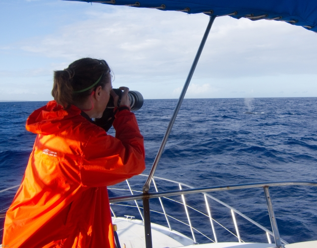 Figure 2_photographing humpbacks