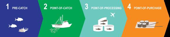 Seafood Supply Chain