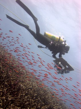 Image 4: Diver Marie Ferguson tows over a school of anthias at Jarvis Island. Photo by Kevin Lino