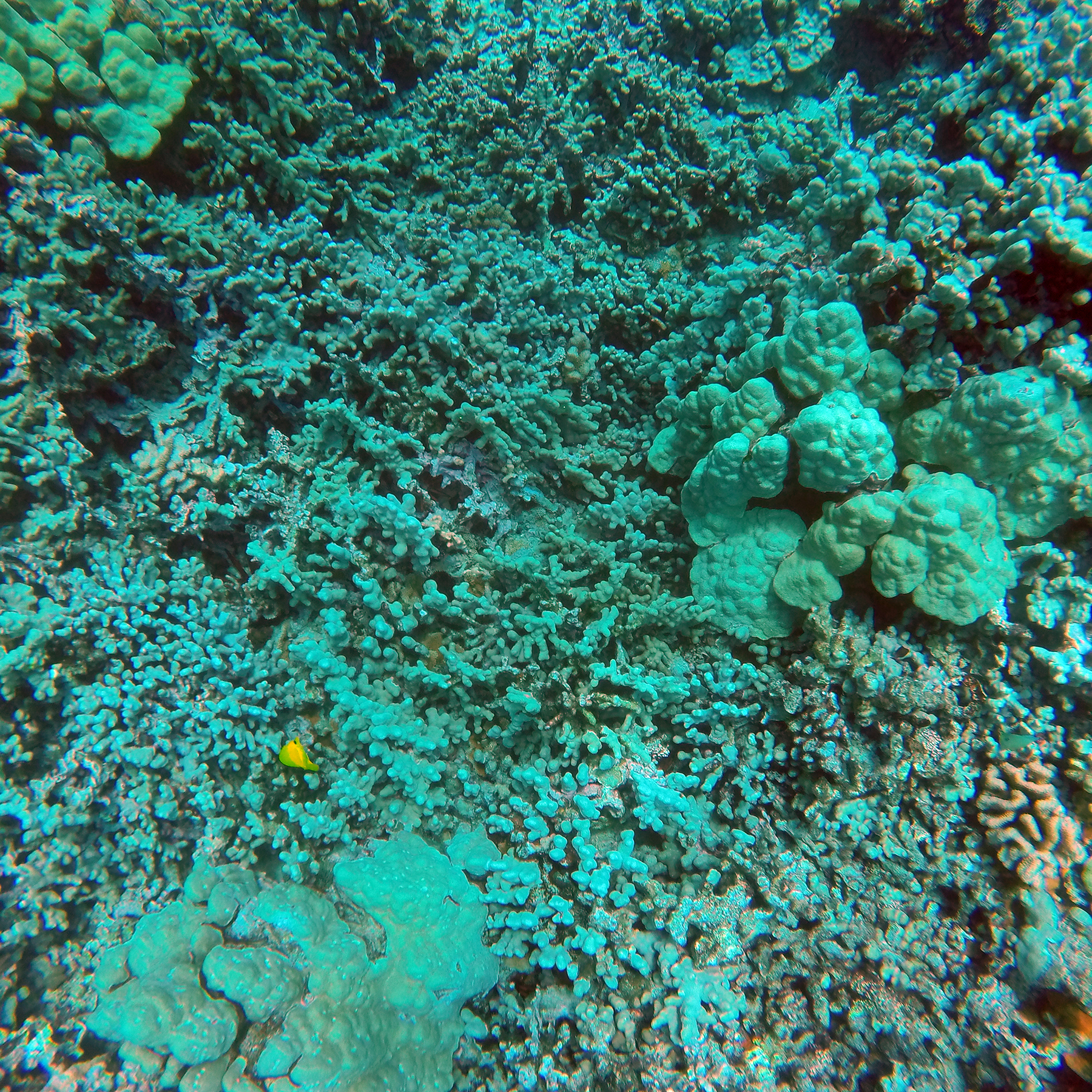 NOAA Pacific Islands Fisheries Science Center Blog
