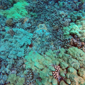 A coral reef typical of those we found off West Hawai'i.