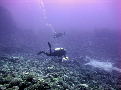 "Scientists survey fish populations using the ""Stationary Point Count"" method, in which pairs of divers record the number, size, and species of all fishes observed within adjacent visually estimated cylinders 15 meters in diameter. NOAA photo by Paula Ayotte."