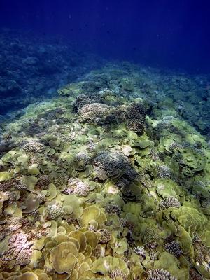Reef at Swains Island, American Samoa (NOAA Photo by Louise Giuseffi)