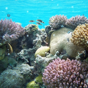 Coral reef at Rose Atoll, American Samoa