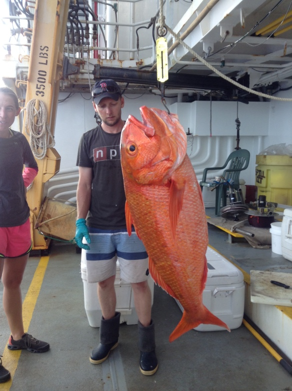 Figure 6. A 31 kg Etelis sp. being weighted by scientists aboard the NOAA Ship Oscar Elton Sette. This fish will provide vital information about this newly described species that was recently distinguished from its congener Etelis carbunculus.