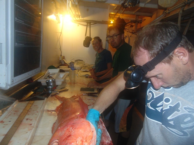 Figure 5. Scientist processing assembly line. All fish are identified to species, weighted, measured, and sexed. Biological samples (otoliths, gonads, fin clips) are extracted for life history studies.