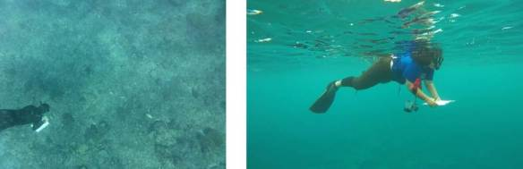 Figure 1. NOAA and MNRE researchers conduct coral bleaching survey using snorkel.