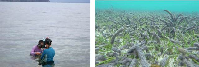 Figure 4. NOAA and MNRE researchers consult about cyanobacteria growing on seagrass leaves.