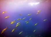 1.Reef_fish