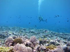 Recording fish data