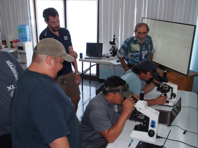 I provided histological slides of gonadal materials for a practicum to assess the abilities of biologists to accurately evaluate sex and sexual maturity. Here a DFW biologist and Tony Flores (MES, next to myself) examine microscope slides while Manny Ramon (MES, in front) and Trey Dunn (DFW) look on.