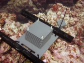 Close-up of ARMS unit at Pearl and Hermes Atoll, NWHI (NOAA Photo)