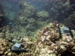 Autonomous Reef Monitoring Structures (ARMS) installed at Pearl and Hermes Atoll, NWHI (NOAA Photo)