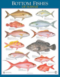 Figure 1. HI bottomfish poster from the Hawaii Department of Aquatic Resource