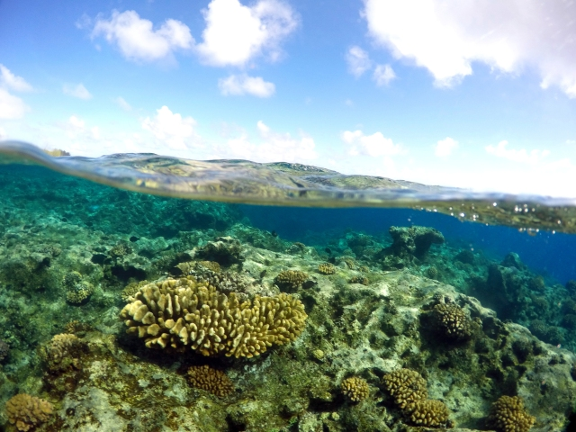 Reef at Wake Atoll