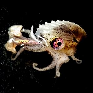 3.Nautilus_BethFrancis