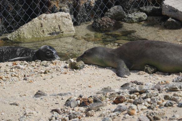 ffs-rehab-seals