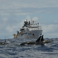 HICEAS Hilite: Killer whales in the tropics