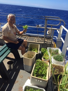 CDR Tran tends to all living things aboard the Sette, including his container garden. Photo credit: NOAA Fisheries/Ali Bayless